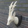 Whitewash Straight Horn Deer Head