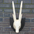 Whitewash Straight Horn Deer Head