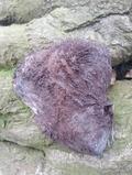 Lodestone Rough Natural Stone Crystal